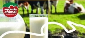MAMITE ou mastite bovina