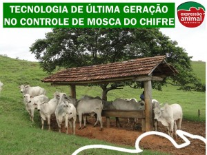 MOSCA DO CHIFRE