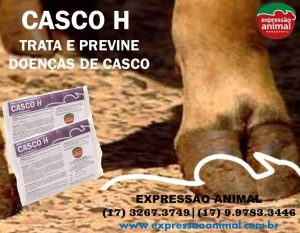 CASCO BOVINO