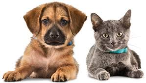 homeopatia-pets-cao-gato