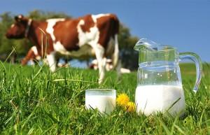 leite-de-vaca-cru-ou-pasteurizado
